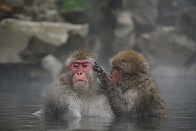 makakové ve vodě