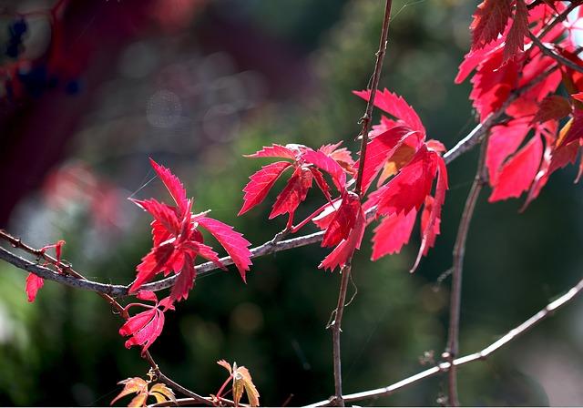 červené listy